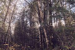 DSC01273-4800 (westonde) Tags: minolta rokkor oregon mounthood forest pacificnw rokkor24mmf28