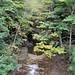 0734 Buttermilk Falls State Park