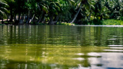 Into The Tropical Oasis (Laith Stevens Photography) Tags: green water oasis tropical south pacific wet cool fun palm trees coconuts silky smooth landscape outdoor olympus omd em1 1240mm f28 pro ngc