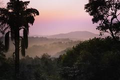 Good morning! (uvsb) Tags: sky plantation green india morning coorg karnataka forest madikeri