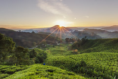 5DSR3508 (woon 1103) Tags: cameron highlands landscape sunrise milky way