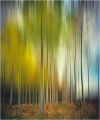 Flou Automnal (PascaLucasJy) Tags: automne arbres tree couleurs color lumire light paysage landscape bretagne breizh brittany campagne soir soleil finistre france flou