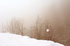 Fog (natural illusions) Tags: november snow white fog tree pentax k200d rawtherapee gimp imagemagick mist countryside walking slovenia europe outdoor hills nature dof landscape lb1415 interesting allrightsreserved