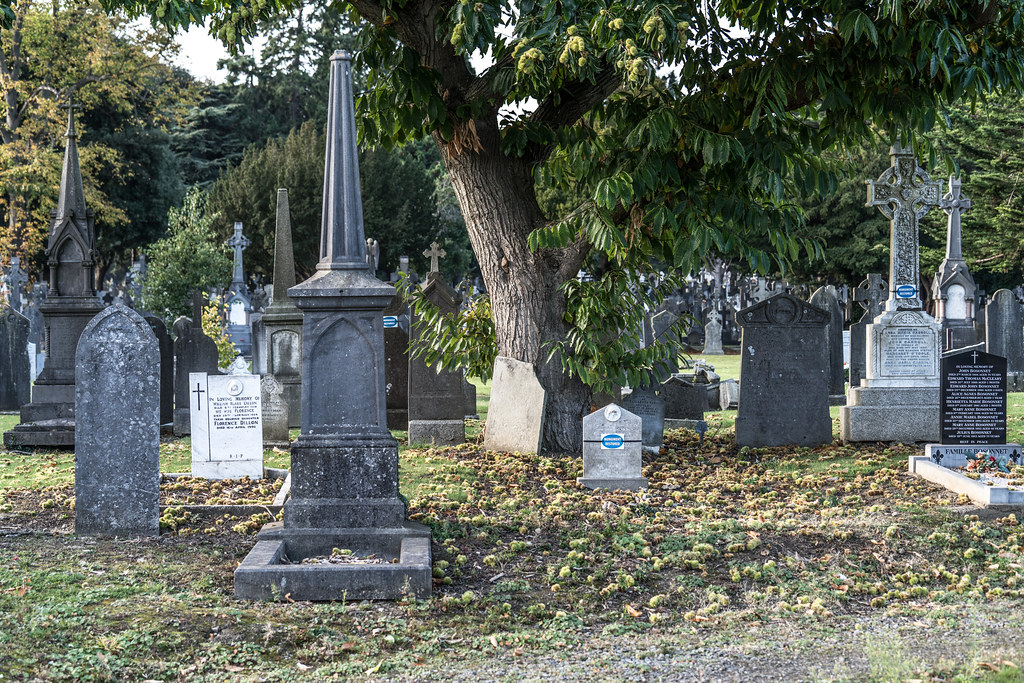 A QUICK VISIT TO GLASNEVIN CEMETERY[SONY F2.8 70-200 GM LENS]-122085