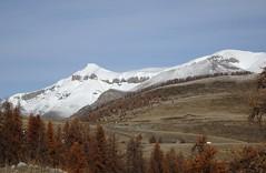 bientôt l'hiver (b.four) Tags: montagne montagna mountain mélèze larch laricio col des huerris valberg hautcianshautvar alpesmaritimes cimenègre ruby5 ruby10