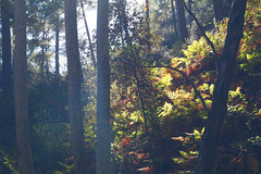 Troodos Geopark (23) (Polis Poliviou) Tags: polispoliviou polis poliviou   cyprus cyprustheallyearroundisland cyprusinyourheart yearroundisland zypern republicofcyprus  cipro  chypre   chipir chipre  kipras ciprus cypr  cypern kypr  sayprus kypros polispoliviou2016 troodosgeopark troodos mediterranean nicosia valley life nature forest historical park trekking hiking winter walking pine pines prodromos limassol paphos fall autumn geopark kakopetria