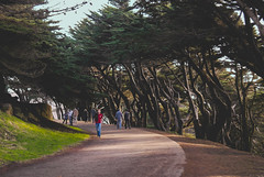 Landsend trail-San Francisco (Rvs1966) Tags: trees nature people lightroom outdoor samsungnx photography flickr explore explored california sanfrancisco landsendtrail