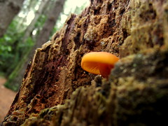Surgiendo (dan95_Zambrano) Tags: hongo naturaleza fungi biologia natural arbol madera textura venezuela color dinamismo fuerza