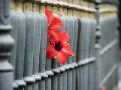 Flowers in prison