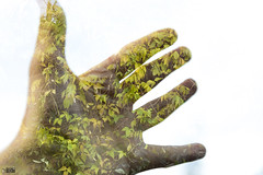 Reach out to lesser the footprint (happad fotografie) Tags: double exposure doubleexposure hand sky leafs light bright