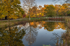 Bonneyville Reflections (tquist24) Tags: bonneyvillemillcountypark hdr indiana nikon nikond5300 outdoor autumn bridge fall footbridge geotagged park reflection reflections river tree trees water middlebury unitedstates