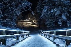 WINTER WONDERLAND (CUMBUGO) Tags: winter snow tree finland nord cold light lamp night stair nikkor 1424mm f28 nikon d800 d800e atmosphere color kakslauttanen ivalo mood lapland