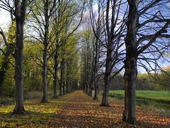 Chateau Marquette (Paul Beentjes) Tags: nederland netherlands heemskerk estate landgoed marquette herfst fall autumn leaves bladeren