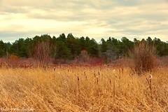 Rithet's Bog (Per@vicbcca) Tags: sony dscrx10m3 rithetsbog victoriabc canada saanichbc wetlands topaz landscape vancouverisland victoria bog britishcolumbia