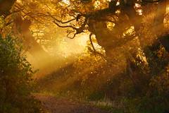 Fragments of Light. (elam2010) Tags: sunrise dawn sunrays sunbeams bridlepath trees light wirral landscape morning panasonic gx7 lumix countryside rural winter shadow silhouettes autumnal fall leaves