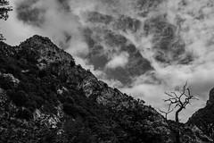 Desfiladero de La Hermida (Frank Talamini) Tags: picosdeeuropa desfiladerodelahermida blackandwhite mountains highcontrast tree cantabria