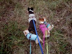 dogs along the Jail Trail (EllenJo) Tags: pentaxqs1 november november28 2016 ellenjoroberts ellenjo jailtrail cottonwoodarizona riparian autumninarizona floyd ivan simon hazel dogs pets dogsinsweaters