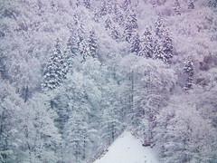 A bare spot in a mountain forest (Raoul Pop) Tags: trees winter slope steep ridge evergreens meadow deciduous mountain snow sinaia muntenia romania ro