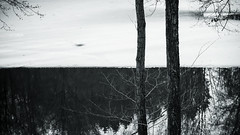(moksimil) Tags: 169 composition contrast day germany ice lines nature outdoors reflection sky tree trees water winter blackandwhite monochrome bw moksimil coldtemperature nopeople heiderbergsee