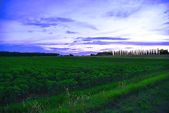 Green! (Henryark) Tags: cypresses field green cottage avenue countryside padule fucecchio tuscany italy trees nature mothernature sky blue clouds sunset enrico nannini henryark nikon nikond750 grass dirt road cultivation agriculture perspective landscape wildangle composition heart outdoor