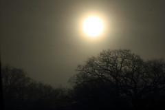 Morgensonne im Nebel (1) (Rüdiger Stehn) Tags: nebel sonne himmel 2000er 2000s 2016 europa mitteleuropa deutschland norddeutschland germany schleswigholstein altenholz altenholzstift baum bäume canoneos550d