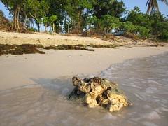 WASHED ASHORE (PINOY PHOTOGRAPHER) Tags: matnog sorsogon bicol bicolandia rock luzon philippines asia world