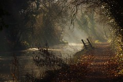 Rays (Karen Warren1) Tags: canal tree silhouette sunrays path towpath water reflection