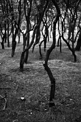 *** (Misha Sokolnikov) Tags: leica travel trees blackandwhite bw tree blancoynegro nature monochrome georgia photography 50mm mono photo blackwhite woods noir noiretblanc apo monochrom blanc tbilisi noirblanc sakartvelo blanconoir tumblr aposummicron artistsontumblr leicamonochrom photographersontumblr