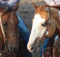 Horse Faces (Sandy*S) Tags: horse cowboy nebraska rodeo sandhills atkinson ranchrodeo