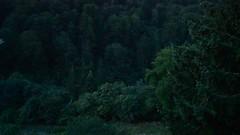 VID_2015_Rila_4520 (emzepe) Tags: morning film window water wall forest movie dawn early video woods monastery rila sound rooster flowing noise kora fala augusztus bulgarie erdei fal patak 2015 bulgarien hajnal nyr ablak erd kakas reggel   foly   hegyi bulgria korn kolostor hajnalban videofelvtel filmfelvtel rilai kukorkol kukorkols kakaskukorkols vzcsobogs