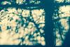 Untitled (Roberta Martino_ LOUD LIKE LOVE) Tags: tree nature foglie reflections painting object dreamy leafs albero visualcommunication catc sognante differentpointofviews oggeto