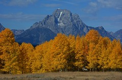 Mt. Moran in the Fall - 2184b (teagden) Tags: park autumn orange mountain fall nature landscape photography gold golden fallcolors scenic grand autumncolors national wyoming mountmoran grandtetons gt teton tetons moran grandteton naturephotography grandtetonnationalpark landscapephotography tetonmountains gtnp mtmoran goldencolors jenniferhall jenhall jenhallphotography jenhallwildlifephotography