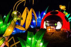 Bug Battle? (Jerry Bowley) Tags: calgary mantis insect zoo praying insects lanterns ladybug prayingmantis calgaryzoo yyc illuminasia