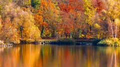 Autumn surrounded (Ker Kaya) Tags: autumn automne fall kerkaya lake pond mirror reflection trees landscape red yellow orange colors colours nature water france alsace strasbourg indian summer fdekerkaya ker kaya artist photography dmcfz200 kerkayaphotography 2dwf stripes