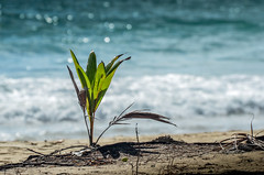 DSC_0441 (NICOLAS POUSSIN PHOTOGRAPHIE) Tags: soleil eau sable bleu coco fin vague plage rocher palmier bois seychelle turquoide