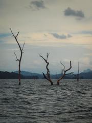 Cheow Lan Lake (Andy Kaye) Tags: park lake forest thailand lan national jungle thani khao khaosok surat sok suratthani cheow