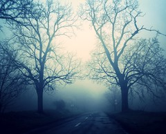 2trees (palinta) Tags: road trees 2 mist tree nature misty fog treesubject palinta