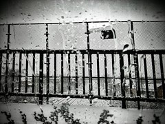 12407438_1647833952136265_1197654608_n (dragica_basaric) Tags: winter snow wonderland magic magical snowy flake nature green colours streets treet postcar postcards love train phot january 03 2016 photo photography d b danchy92 dragicabasaric lapovo serbia srbija srb sumadija dbphotography