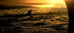 Good Morning HFF (BrigitteE1) Tags: goodmorning hff happyfencefriday sunrise bremen deutschland sonnenaufgang germany herbst fall autumn morgen morning earlymorning frhmorgens awakening landscape meadow fence sun morgennebel morningfog