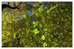 foglie in autunno (M.K.S. v i d e o • p h o t o g r a p h y) Tags: pratomagno autunno autumn ausdernaturoutofnature marksoetebierphotography mksvideophotography marksoetebier markchristiansoetebierphotography mks canon canoneos70d toscana tuscany toscane tuscani laterina lorociuffenna casentino valdarno