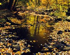 Late Fall, Bon Echo Creek (klauslang99) Tags: klauslang nature naturalworld northamerica canada fall autumn trees water creek bon echo park reflection