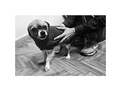 E.T. before walk (Marek Pupk) Tags: central europe slovakia blackandwhite monochrome bw documentary alien et dog