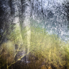 Birch (gerainte1) Tags: birch trees woodland colour layers