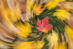 Seasons and Cycles (skumar0108) Tags: leaves fall fallcolors autumn season fallseason arlington cemetery arlingtoncemetery arlingtonnationalcemetery colors red yellow green trick zoom spin swirl longexposure abstract abstraction pentax tamron hoya cpl circularpolarizer creative art fineart