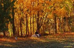 Escenas del campo..Quel (kirru11) Tags: paisaje otoo campo persona perro gato rboles hierva hojas quel larioja espaa kirru11 anaechebarria canonpowershot