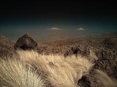 Parque Nacional Desierto de los Leones (Pablo Leautaud.) Tags: suelodeconservacion mexico ciudaddemexico cdmx pleautaud naturaleza nature infrared infrarrojo ir parquenacional desiertodelosleones