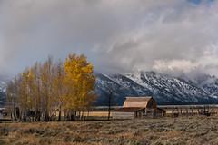 Seasons changing at the Moulton Barn (Jeff Bernhard) Tags: t a moulton barn grand teton national park gtnp tetons snow fall