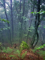 Forest (R_Ivanova) Tags: nature forest tree fall autumn mist fog colors color bulgaria rivanova