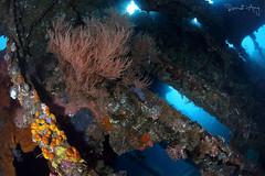 Cargo Room (Randi Ang) Tags: usatliberty libertywreck wreckdive shipwreck tulamben bali indonesia underwater scuba diving dive photography wide angle randi ang canon eos 6d fisheye 15mm randiang