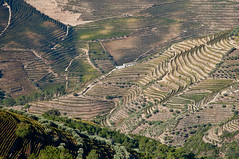 Douro vineyards (JOAO DE BARROS) Tags: barros douro portugal joo landscape vineyards